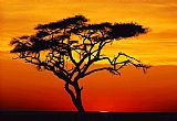 2010 Famous Paintings - Sunset tree