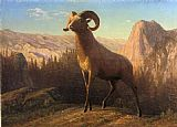 Mountain Canvas Paintings - A Rocky Mountain Sheep Ovis Montana