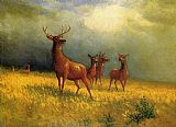 Albert Bierstadt Deer in a Field painting
