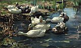 Alexander Koester - Ducks in a Quiet Pool