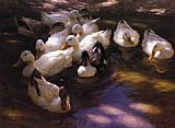 Alexander Koester - Eleven Ducks in the Morning Sun