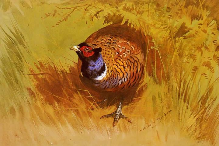 Archibald Thorburn Canvas Paintings