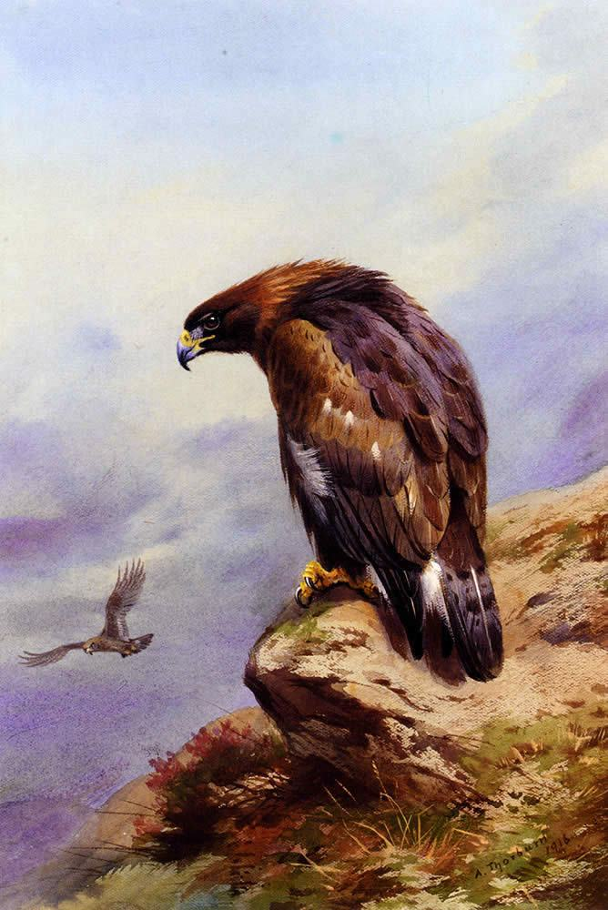 Archibald Thorburn A Golden Eagle