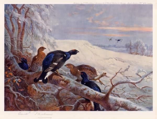 Archibald Thorburn Blackgame in Winter