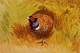 Archibald Thorburn Canvas Paintings - A Cock Pheasant