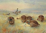 Archibald Thorburn Canvas Paintings - A Frosty Dawn