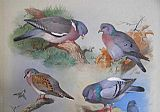 Archibald Thorburn Canvas Paintings - A Wood Pigeon A Stock Dove A Turtle Dove A Rock Pigeon