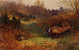 Archibald Thorburn - Autumn Sunshine