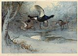 Archibald Thorburn Canvas Paintings - Blackcock Through the Silver Birches