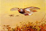 Famous Partridge Paintings - English Partridge In Flight