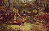 Archibald Thorburn On the Alert painting