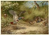 Archibald Thorburn Famous Paintings - Partridges and Young