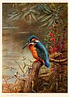 Archibald Thorburn Famous Paintings - Summer Kingfisher