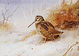 Archibald Thorburn Wall Art - Winter Woodcock