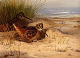 Archibald Thorburn Wall Art - Woodcock Nesting On A Beach