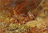 Archibald Thorburn Wall Art - Woodcock and Chicks