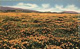 Poppies Canvas Paintings - A Field of Californian Poppies