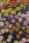 sant Canvas Paintings - Bed of Chrysanthemums