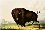 George Catlin - A Bison, circa 1832