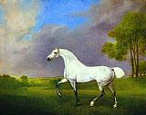 Famous Horse Paintings - A Grey Horse