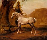 George Stubbs - A Grey Stallion In A Landscape