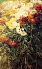 Gustave Caillebotte Canvas Paintings - Chrysanthemums Garden at Petit Gennevilliers