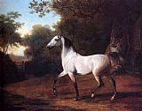 Jacques Laurent Agasse - A Grey Arab Stallion In A Wooded Landscape