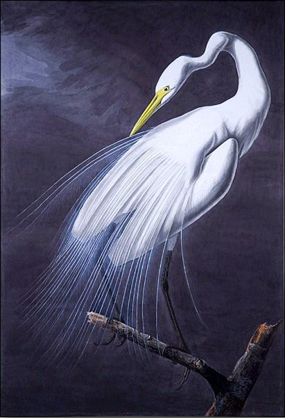 John James Audubon Great Egret