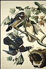 Famous Wood Paintings - Wood Duck