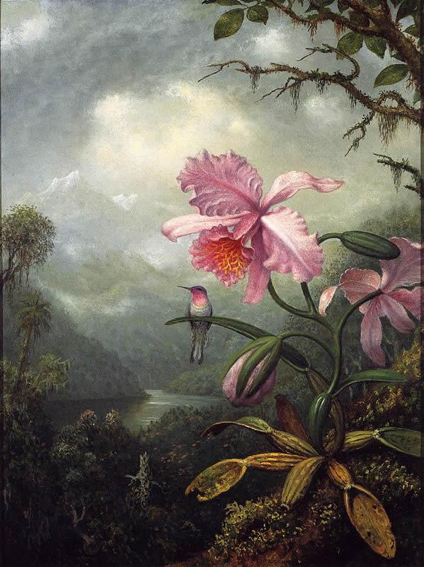 Martin Johnson Heade Hummingbird Perched on an Orchid Plant