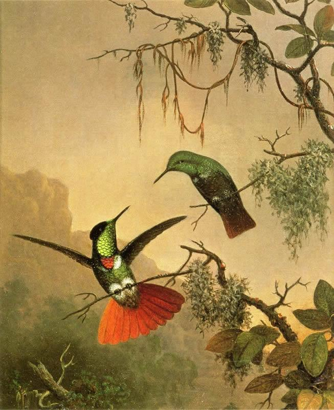 Martin Johnson Heade Two Hooded Visorbearer Hummingbirds
