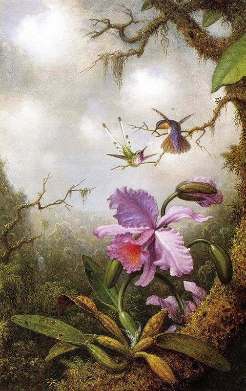 Martin Johnson Heade Two Hummingbirds and a PinkOrchid