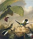 Black Canvas Paintings - Black-Eared Fairy