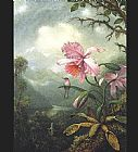 Famous Orchid Paintings - Hummingbird Perched on an Orchid Plat