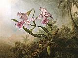 Orchids and Hummingbird 1875