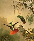 Martin Johnson Heade Wall Art - Two Hooded Visorbearer Hummingbirds