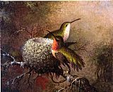 martin johnson heade Wall Art - Two Ruby Throats by their Nest