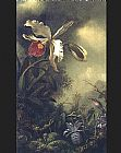 White Canvas Paintings - White Orchid and Hummingbird