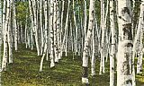 rest Wall Art - White Birch Forest, Wisconsin