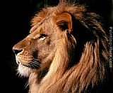 Lion Canvas Paintings - African Lion