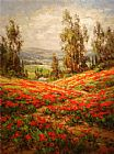 Unknown Artist Poppy Field A View From Above painting