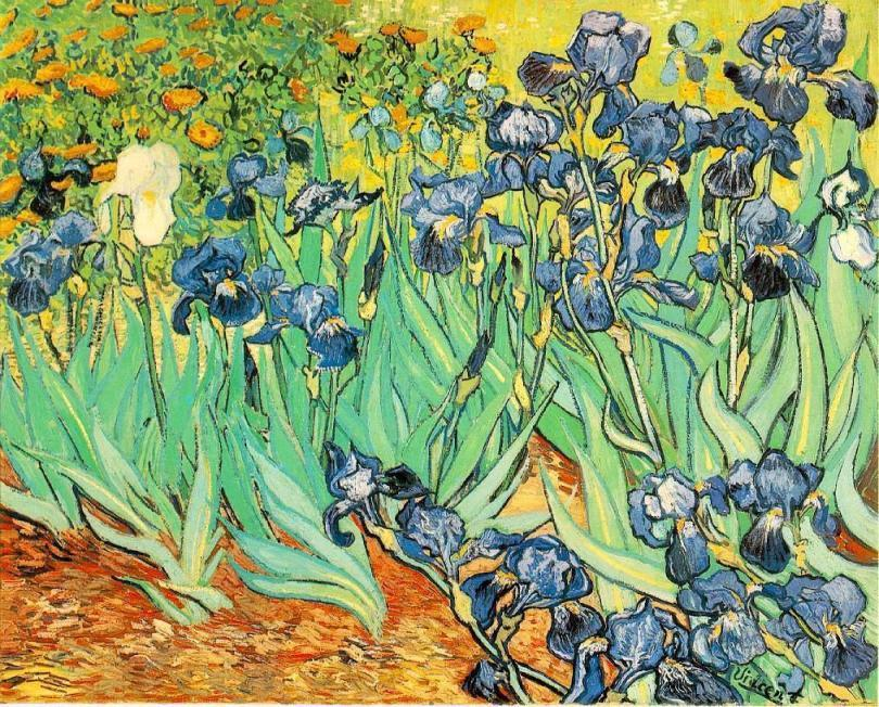 Well known Vincent van Gogh Irises painting | framed paintings for sale VG63