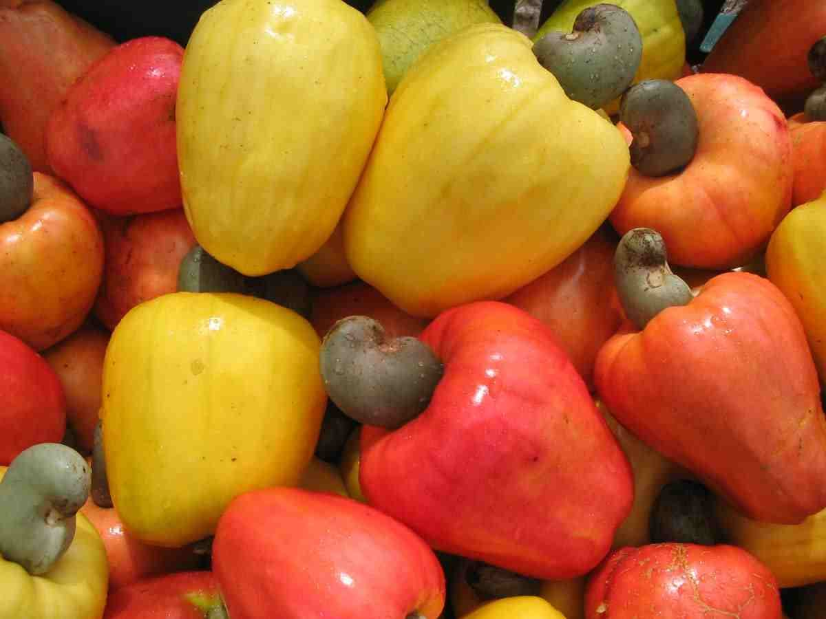 Unknown Artist cashew fruits