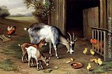 goat Wall Art - Goats And Poultry