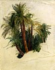 Trees Wall Art - Study Of Palm Trees