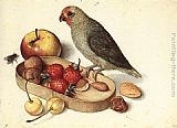 Georg Flegel - Still-Life with Pygmy Parrot