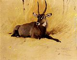 Wilhelm Kuhnert - A Common Waterbuck