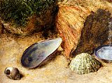 William Henry Hunt - Still Life With Sea Shells On A Mossy Bank