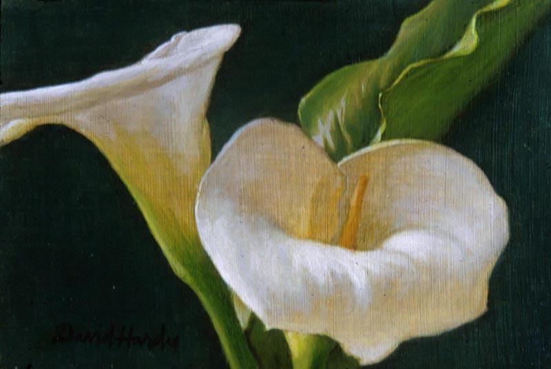 David Hardy Calla Lily Duo