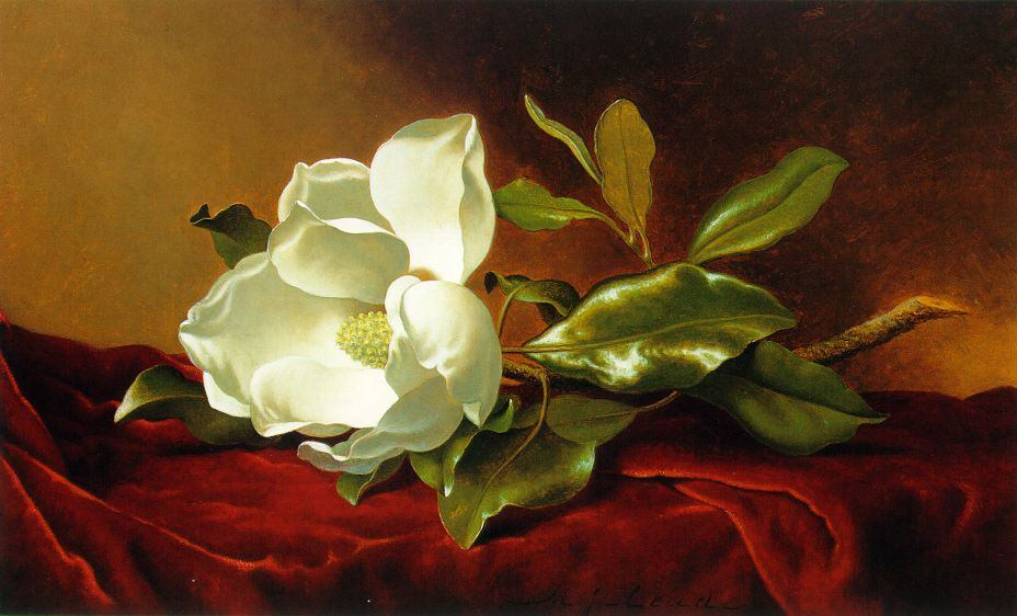 Martin Johnson Heade A Magnolia on Red Velvet